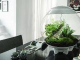 Terarii uimitoare cu plante de apartament. Adu un colt de natura in casa ta