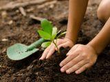 Calendarul gradinarului in luna februarie! Ce trebuie sa faci de indata ce se dezgheata solul