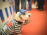 Singurul eveniment de lifestyle pentru animale isi deschide portile pe 5 mai