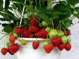 5 fructe pe care le poti creste in ghiveci