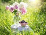Bujorii, florile Zeitei Lunii! Ce nu stiai despre aceste flori luxuriante