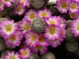Plante suculente cu flori ireal de frumoase