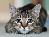 O pisica se crede cal si se comporta ca atare! VIDEO amuzant