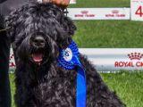 Mihai Nae, dresorul canin cu cei mai multi campioni! Fa cunostinta cu Tara, Vigor si Lara