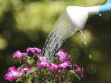 Cum poti salva o planta de la inec