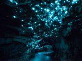 Pesterile luminoase din Noua Zeelanda