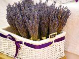 Plante medicinale pe care le poti recolta din gradina in perioada august-septembrie