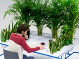 plante pentru birou