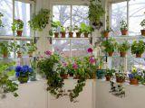 Cand trebuie sa muti plantele in interior si la ce sa fii atent