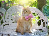 250 de pisici se pregatesc pentru cel mai mare concurs de frumusete! Incepe SofistiCAT