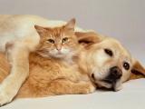 Cercetatorii au dezvaluit care este hrana corecta pentru caini si pisici!