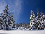 Vremea in minivacanta de 1 decembrie! Afla unde va ninge