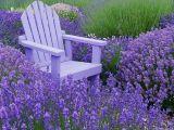 Top 5 flori care iti garanteaza cea mai parfumata gradina