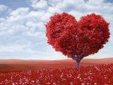 Horoscopul lunii februarie! Ce ti-au pregatit astrele in dragoste in luna iubirii