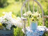 Calendarul gradinarului – aprilie 2018! Ce legume si flori poti planta