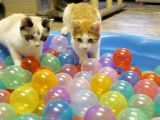 PetExpo, cel mai mare eveniment dedicat animalelor de companie, implineste 10 ani! Care sunt surprizele!