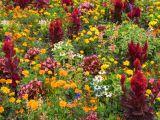 flori toamna gradina