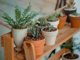 Cum eviti ofilirea plantelor cand esti plecat in concediu