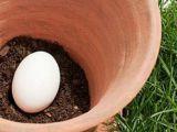 Truc genial: Ce se intampla daca pui un ou in ghiveci!