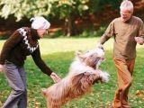 Beneficiile terapeutice oferite de cresterea unui animal