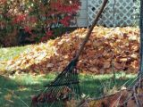 Cum sa prepari ingrasamant din frunze