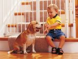 Cum inveti copilul sa aiba grija de un animal in 8 pasi