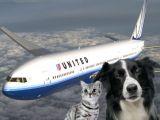 Cum sa transporti animale de companie cu avionul