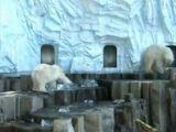 Ursii polari de la zoo din Tokio primesc hrana in cuburi de gheata