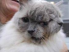 Pisica cu doua fete a implinit 12 ani