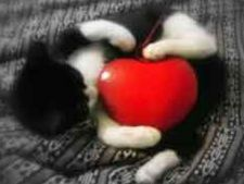 Animalul iti protejeaza inima