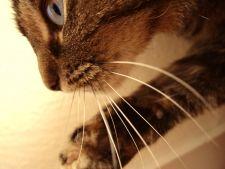 18 curiozitati caraghioase despre animale
