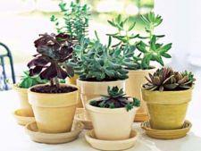 Cum sa tratezi radacinile plantelor pentru a preveni putrezirea