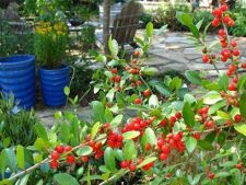 Fructele de padure, o atractie in gradina ta