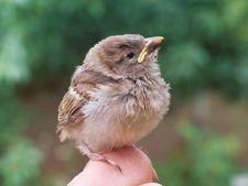 Studiu: Stresul creste sansele de supravietuire in cazul puilor de pasari
