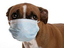 Parvovirusul canin - simptome, cauze si tratament