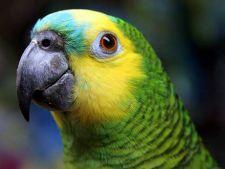 Papagalul tau ciupeste? Iata cum il dezveti