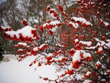 Fructe mici cu efect major: descopera ce minuni fac fructele de padure din gradina de iarna