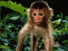 5 animale de companie pe care familia ta le va indragi