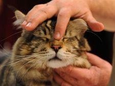Modalitati practice de a apara drepturile animalelor