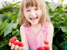 Fructe usor de cultivat in orice gradina