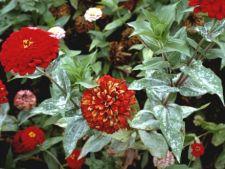 Ce trebuie sa stii despre fainarea plantelor de apartament