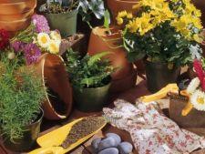 Cum sa indepartezi mirosul urat al pamantului plantelor de apartament