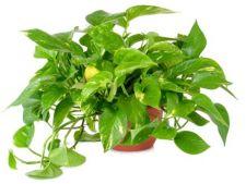 Plante de apartament usor de intretinut