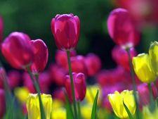 Horoscopul dragostei in martie 2013: cum iubesti la inceput de primavara