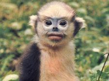 10 specii de animale de care nu ai auzit inca