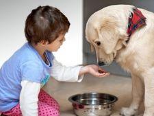 Copilul tau pofteste la hrana animalelor? Cauza, riscuri si solutii