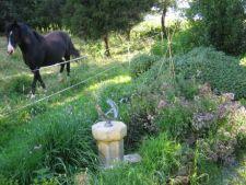 4 plante condiment pe care le poti cultiva in gradina