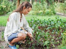 5 legume pe care le poti planta toamna in gradina