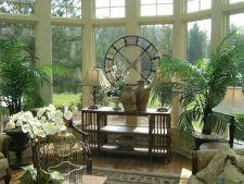3 plante decorative inalte, ideale pentru decorul casei tale