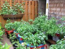Tipuri de gradini urbane de legume